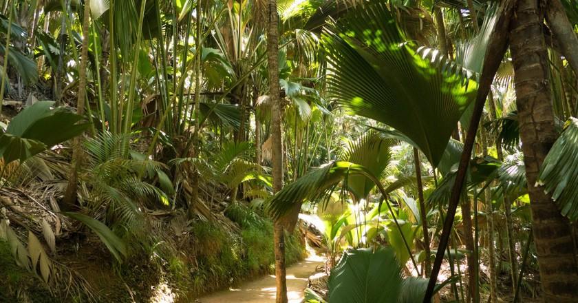 vallee de mai | ©so seychelles/ flickr