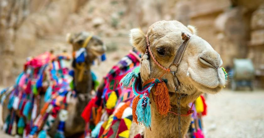 A Solo Traveler's Guide to Jordan