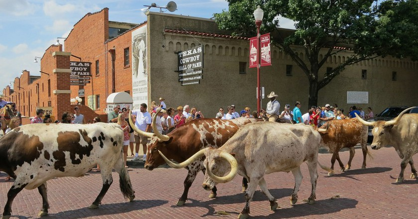 Longhorn cattle drive at Fort Worth Stockyards   © Alex Butterfield / Flickr