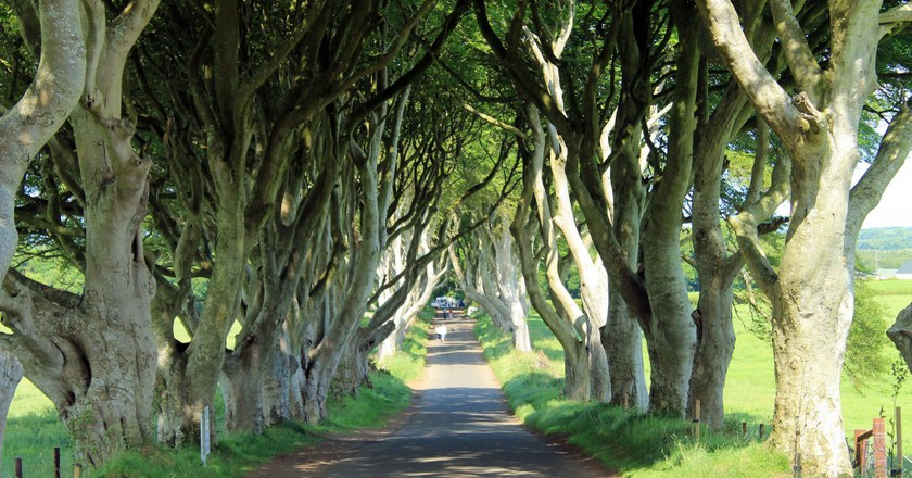 The Dark Hedges | © Portengaround/ Flickr