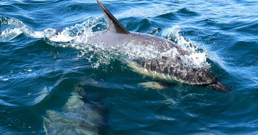 Bottlenose Dolphin | © Emma Bishop/Flickr