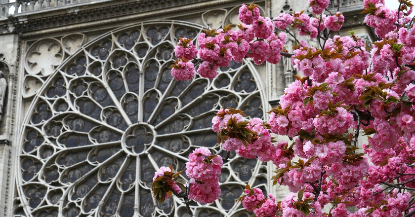 Cherry blossom at Notre-Dame │© Chris Waits / Flickr