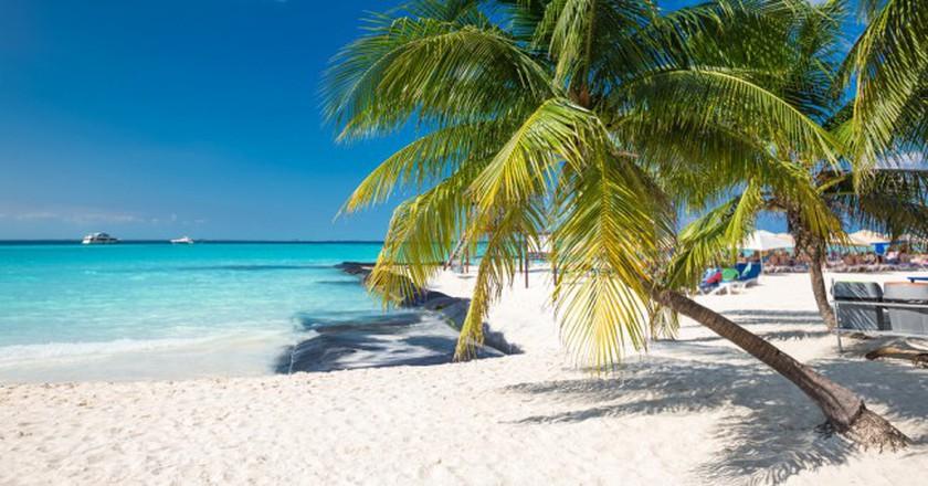 Coconut Palm On Caribbean Beach Cancun Mexico Photopixel Shutterstock