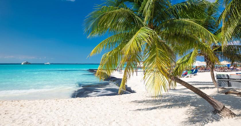 Coconut Palm On Caribbean Beach Cancun Mexico