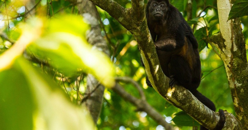 Step into the wild in Costa Rica