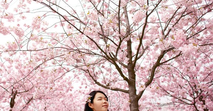 Taking in the beauty of Korean spring   © Tosia Bukowska / GoodFreePhotos