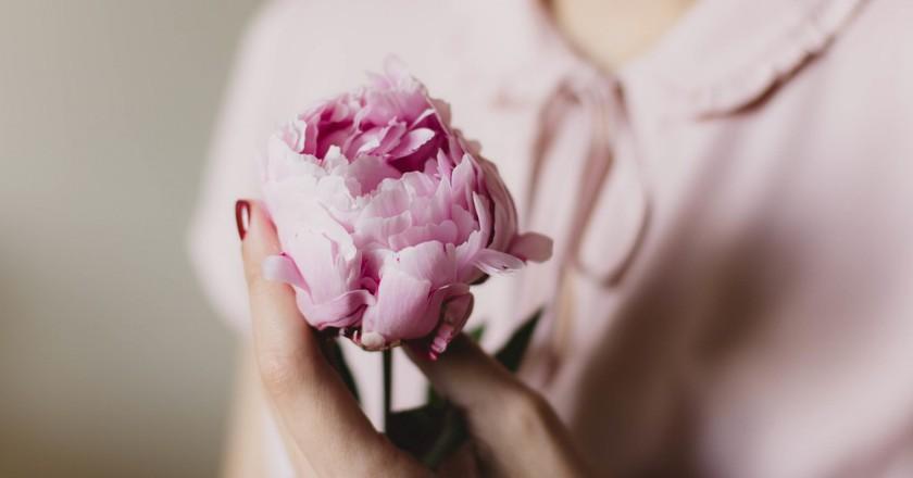 Beautiful Flower | © Pexels