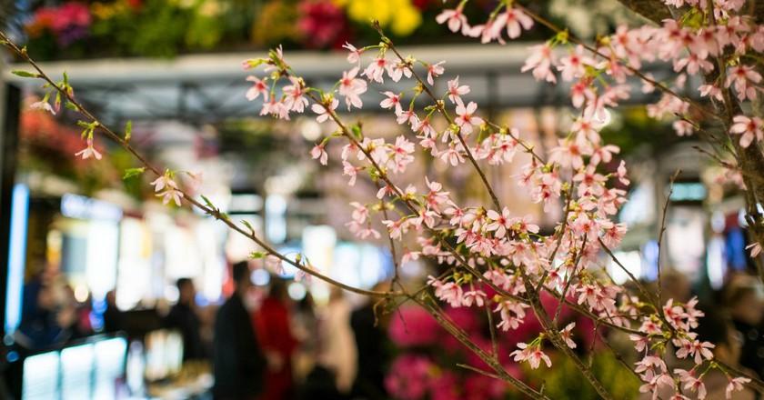 Macy's Flower Show | © Nick Harris / Flickr