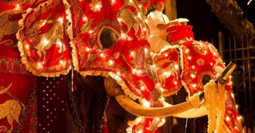 Elephants elegantly garbed for the procession at the Kandy Esala Perahera. |© Amila Tennakoon / Flickr