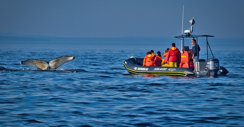 Whale-watching boat tour in Tadoussac | © Kayugee / Flickr