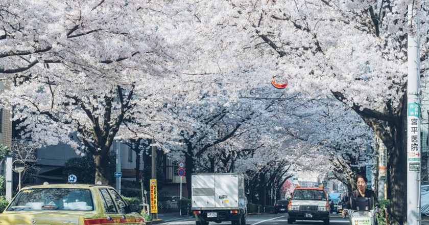 Spring is cherry blossom season in Tokyo   © Zhao !/Flickr