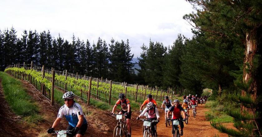 Cyclists biking through a vineyard in Somerset West, Cape Town | © Warren Rohner / Flickr