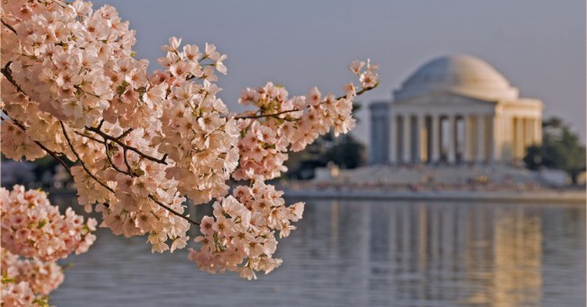 Explore the Jefferson Memorial and the National Mall, there's an app for that   © Ron Cogswell / Flickr