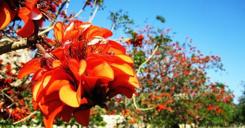 Turia Gardens, Valencia. Photo © Pixabay