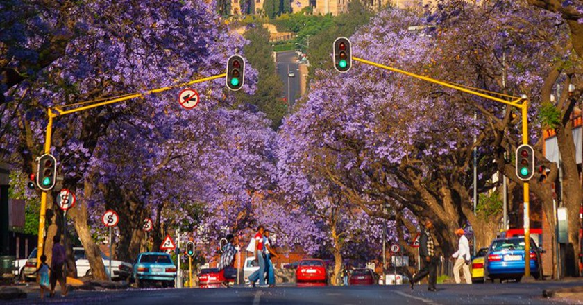 Jacaranda trees line the street leading to the Union Buildings in Pretoria, South Africa | © Hein Waschefort/WikiCommons