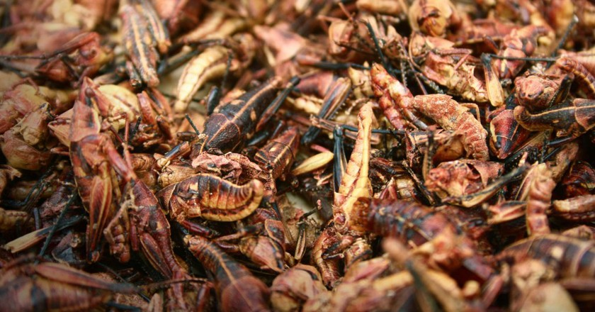 Grasshoppers are a popular food item in Mexico and Central America   © Flickr/Verino77