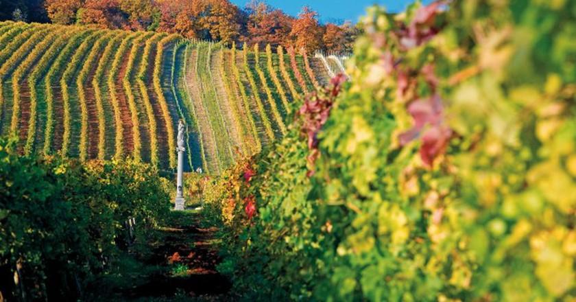 Vineyard in Vienna