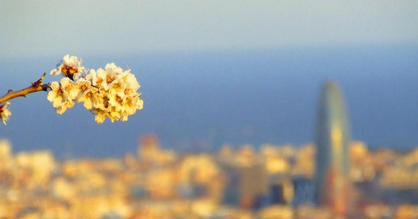 Spring unfolding in Barcelona   © robin robokow / Flickr