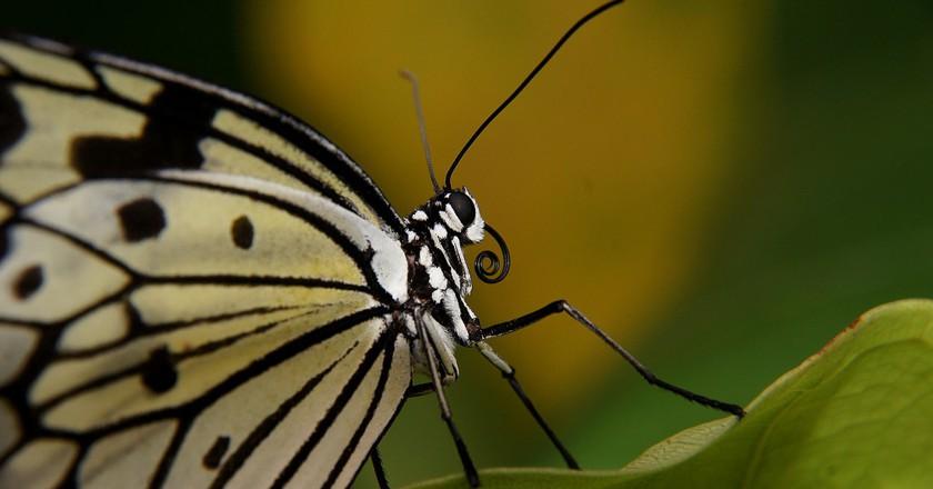 The KL Butterfly Park | © Bernard Spragg. NZ