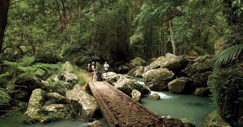 Kondalilla National Park | © Tourism Queensland