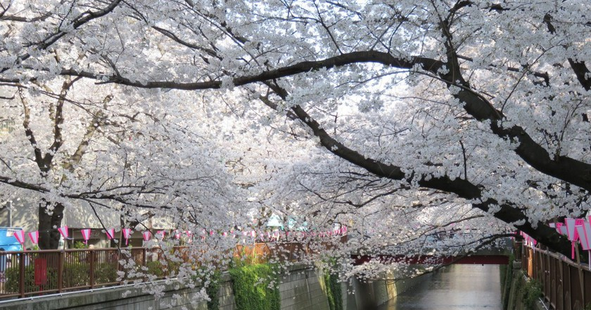 Cherry blossoms along the Meguro River | © Aw1805/WikiCommons