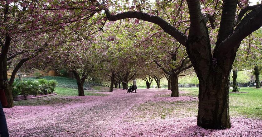 Brooklyn Botanic Garden | © Teri Tynes / Flickr