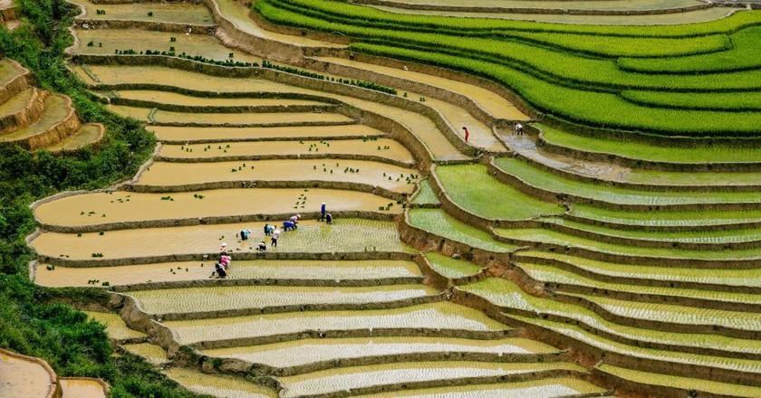 Rice terraces in Vietnam   © Nguyen Anh Tuan/Flickr