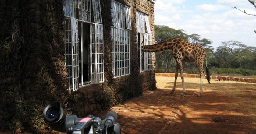 Giraffe Manor   ©Jake/ Flickr