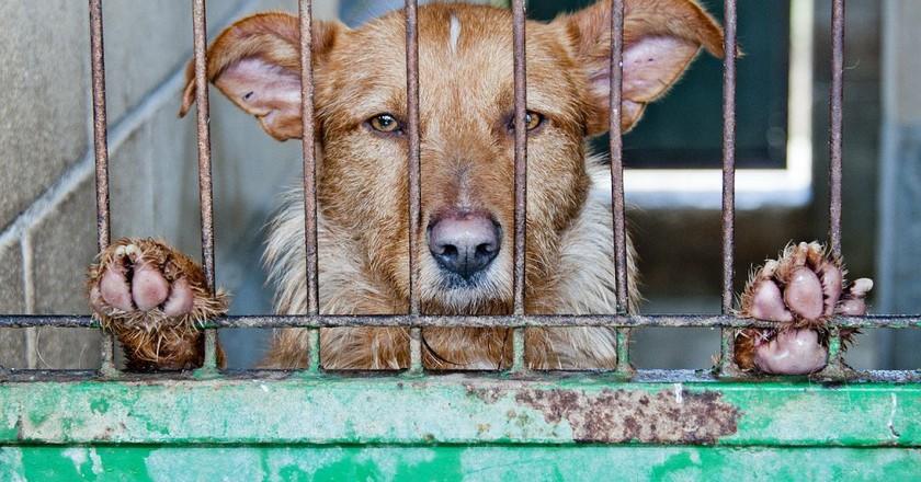 Caged Dog   © amayaeguizabal/Pixabay