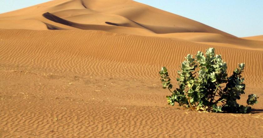 Lone plant in the arid Moroccan desert |© Carlos ZGZ /  Flickr