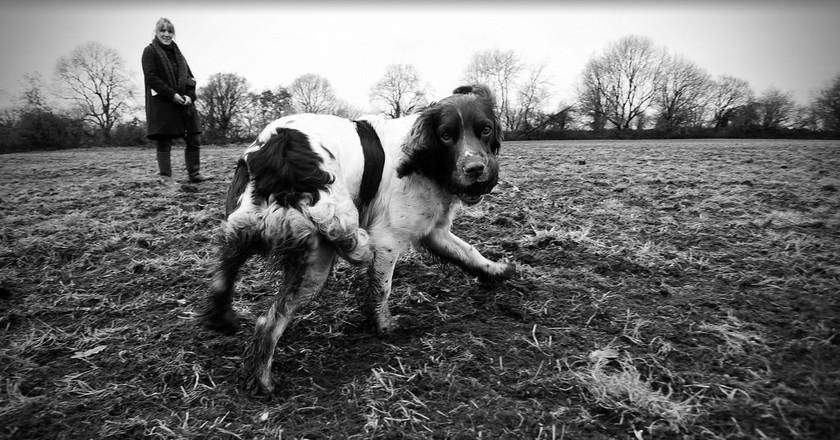 Dog walk   © Stewart Black/Flickr