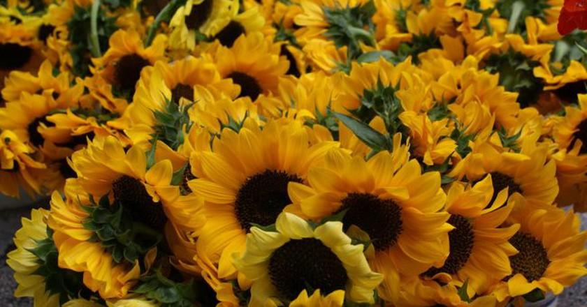 Fresh flowers at the farmer's market   © Gemma Billings / Flickr