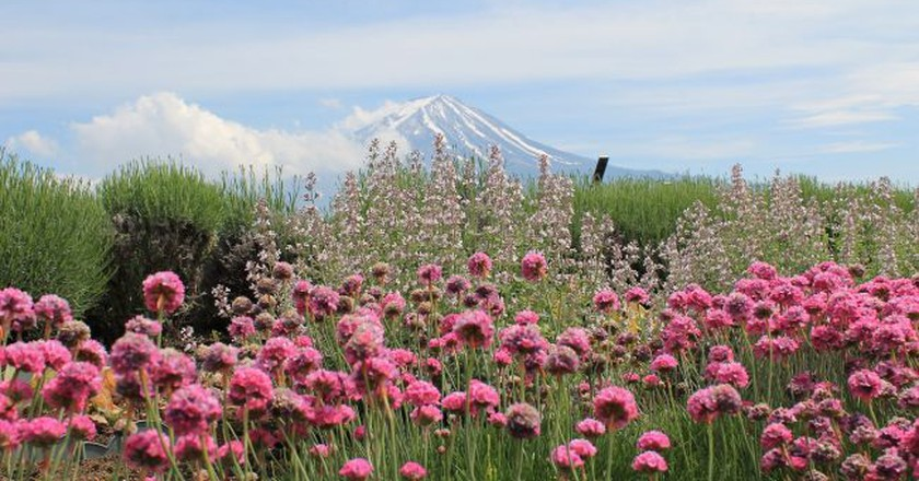 Wildflowers and Mount Fuji | © KevinMeyer/Pixabay