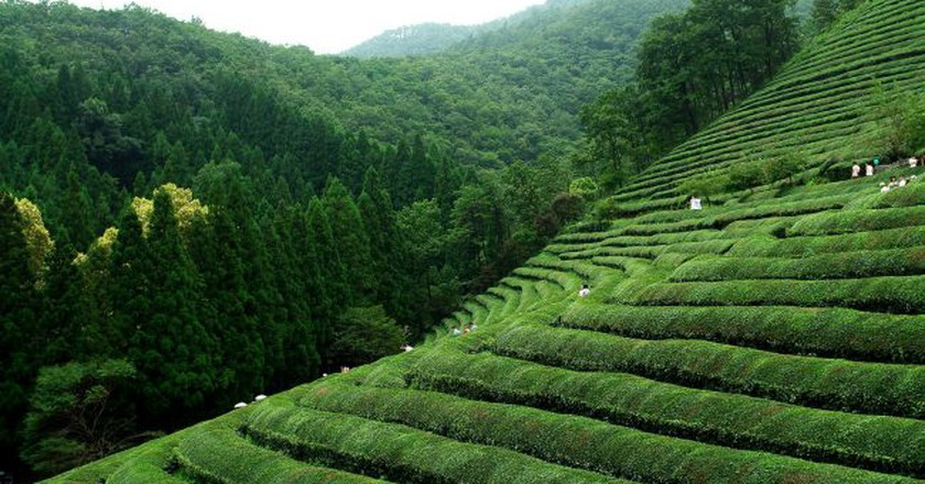 Boseong green tea fields | © Yeongcheol Lee / Flickr