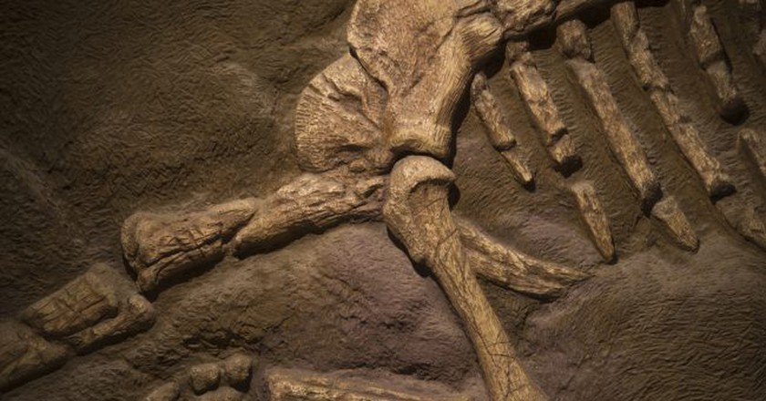 Dinosaur fossil | © Orenzy Photography / Shutterstock