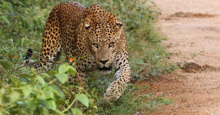 Yala National Park | © Thimindu Goonatillake/WikiCommons