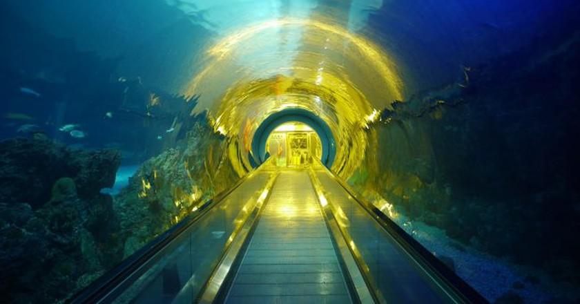 National Museum of Marine Biology and Aquarium | © xixiaotu / Pixabay