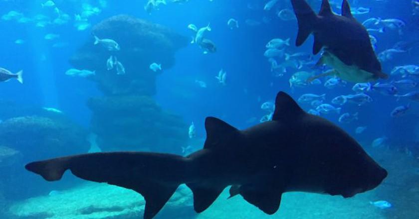Palma Aquarium © Nikki Barilow / Flickr