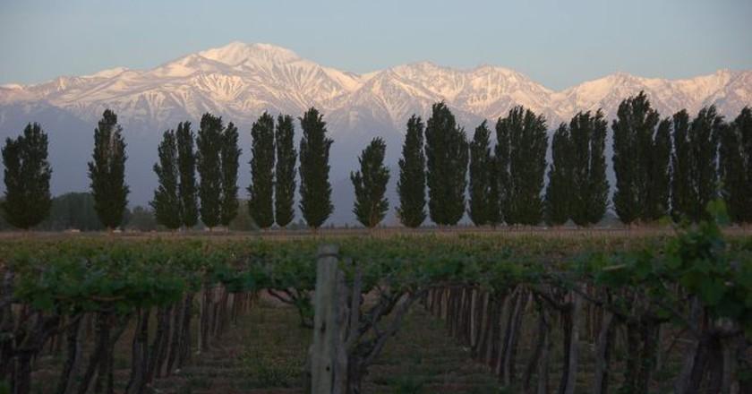 Sunrise in Mendoza   © Tony Bailey/Flickr
