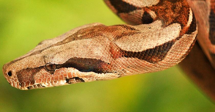 Cobra | © Marcos André/Flickr