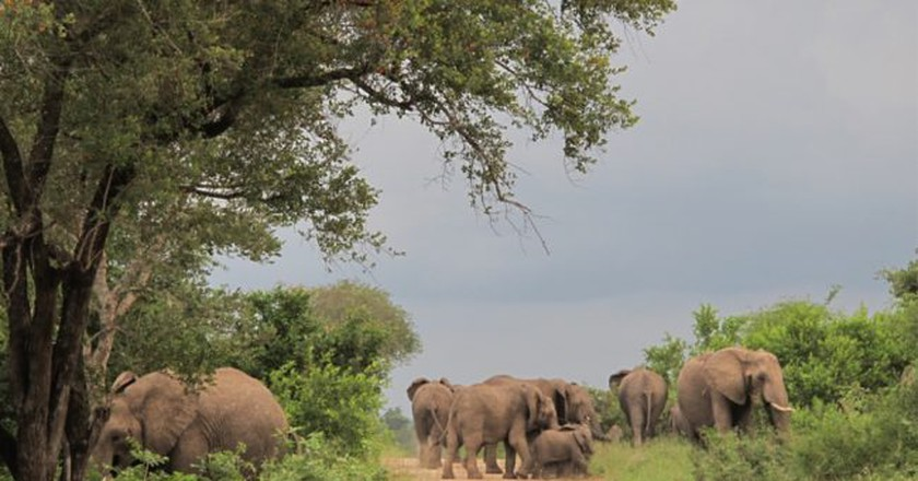 Elephants in the Kruger National Park | © Andrew Thompson