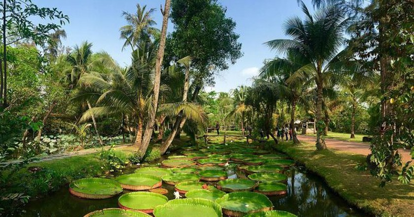 Lotus pond | © trungydang/Wiki Commons