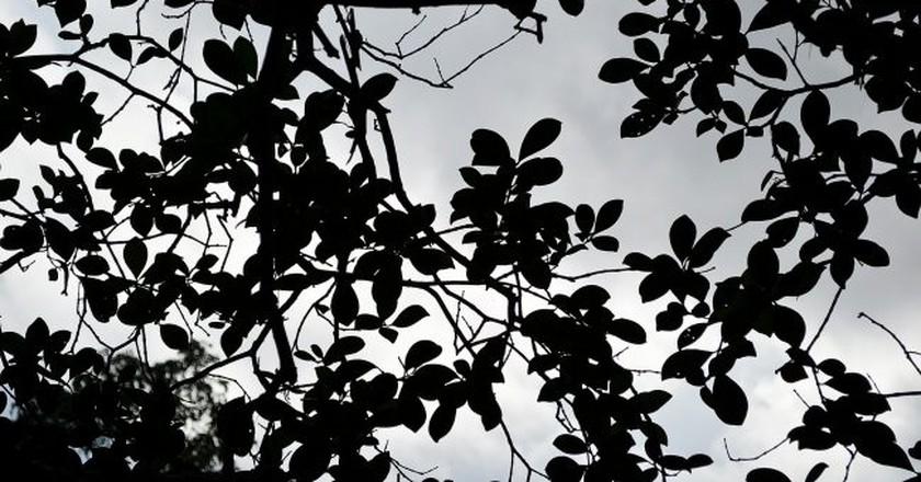 Black leaves  | © Pixabay