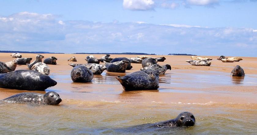 Blakeney Point Seals | © Dun.can/Flickr