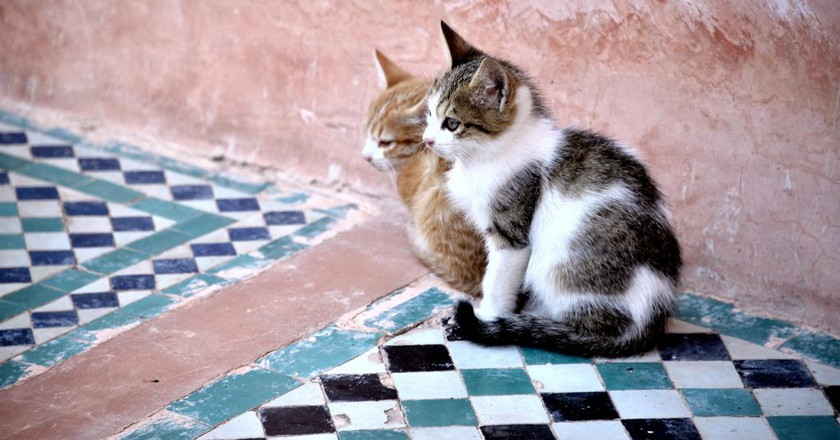 """<a href=""""https://www.flickr.com/photos/erix-pix/30671570533/"""" target=""""_blank"""">Two kittens sitting on colourful tiles 