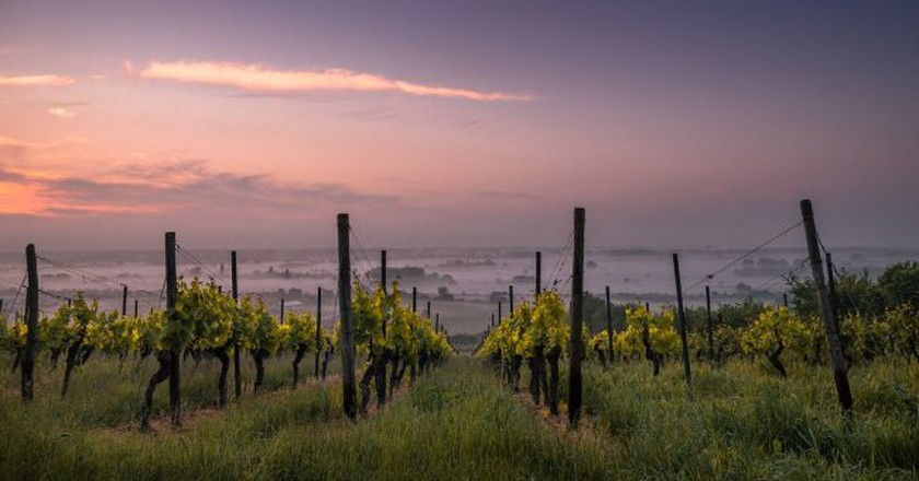 Vineyard | © Pexels/pixabay