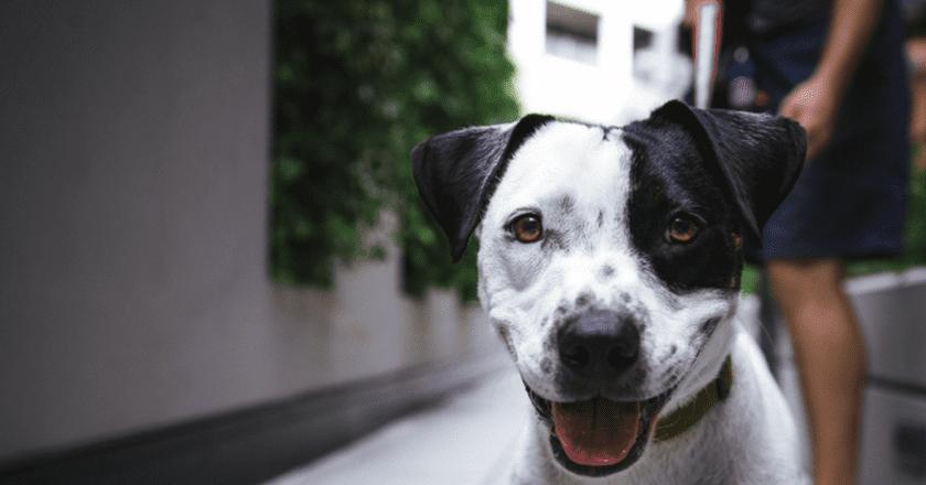 Johannesburg has a wide range of pet-friendly restaurants to suit the needs of every pet owner  © Justin Veenema / Unsplash
