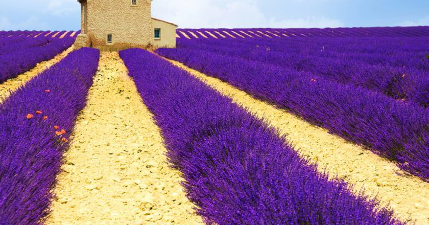 The lavender fields are a must-see in Provence | © Edler von Rabenstein/Shutterstock