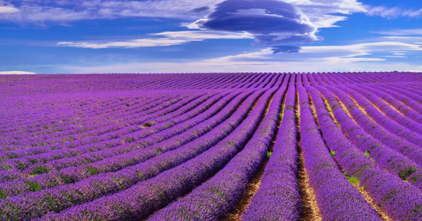 The Mistral Wind is behind everything beautiful to do with Provence   © Oleg Znamenskiy/Shutterstock