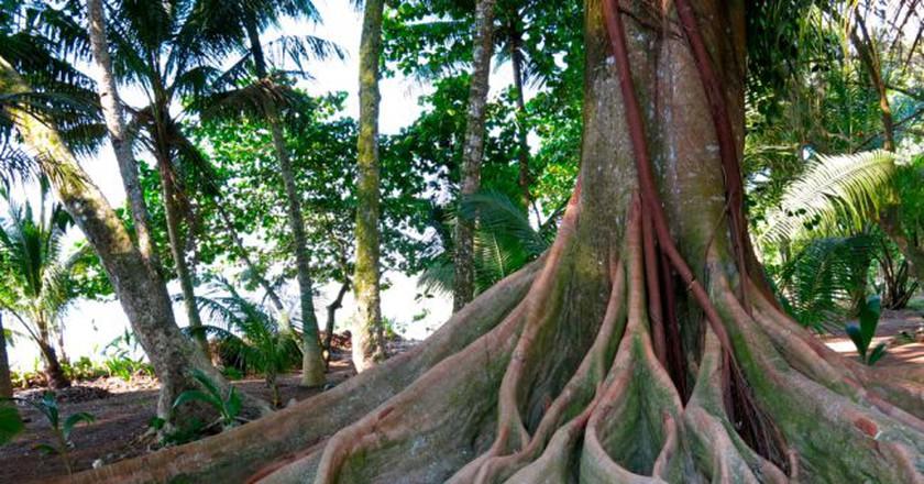 Nature is all around us© Ariel Media Costa Rica/Flickr